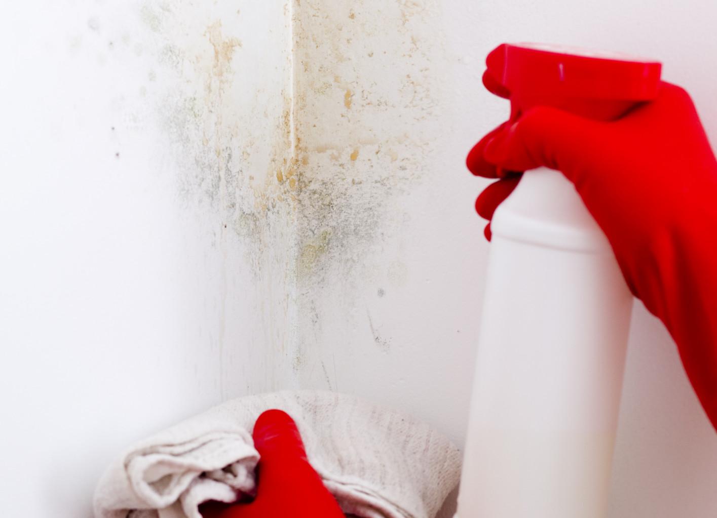 Bersihkan dulu agar terjamin bebas debu